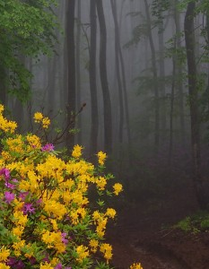 Wildflowers-in-a-misty-forest-2
