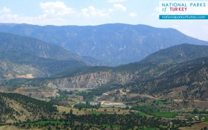 Duzce_plain_Turkey