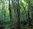 Igneada_Longoz_Forests_National_Park